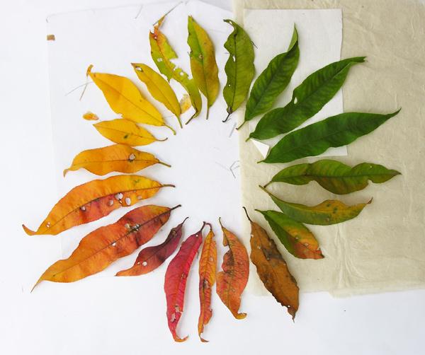 Цветовой круг из листьев персика
