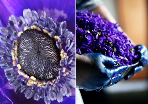 сине-фиолетовый цветок
