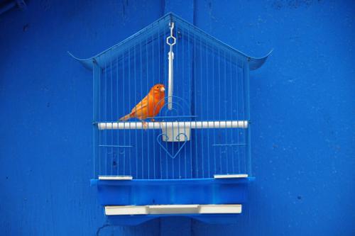 синий оранжевый цвет