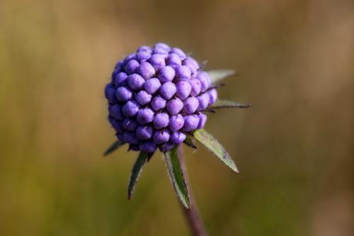 фиолетовый плод