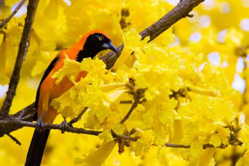 желтое дерево