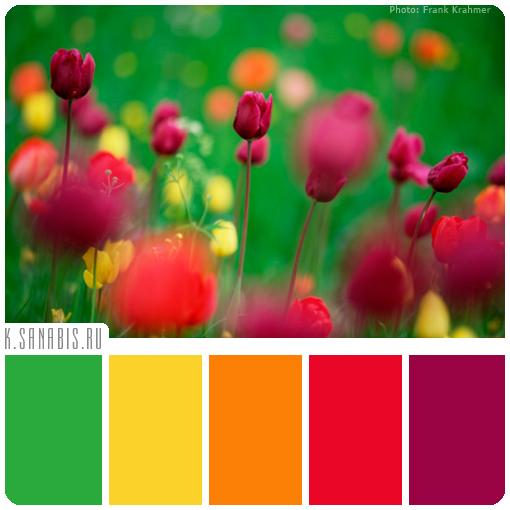 цвет тюльпанов